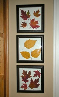 framed leaves for every season Autumn Crafts, Autumn Art, Nature Crafts, Autumn Leaves, Leaf Crafts, Flower Crafts, Diy And Crafts, Framed Leaves, Pressed Leaves