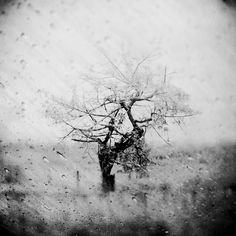 In Nature, Vegetal, Tree, forest. Infinite Sadness, photography by Leda Siloto…