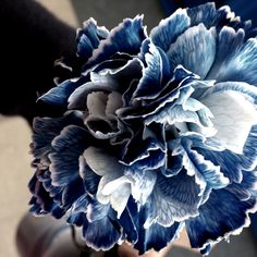 white and navy blue flower