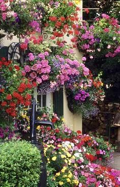 multiple hanging baskets – love this for area around a garage or patio where you cant plant on the ground. multiple hanging baskets – love this for area around a… Hanging Flower Baskets, Hanging Plants, Container Plants, Container Gardening, Beautiful Gardens, Beautiful Flowers, Colorful Flowers, Garden Cottage, Dream Garden