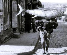 İşte İstanbul'un balık cenneti olduğu o yıllardan görülmemiş fotoğraflar...