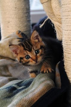 Kitty moment ! #cute #kitten #animal #pet #chat #cat #socialnetwork #yummypets JOIN US , Create your album and we will share your photo ! Yummypets.com
