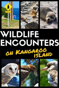 Kangaroo Island is the perfect place for wilderness and wildlife lovers.  In South Australia.