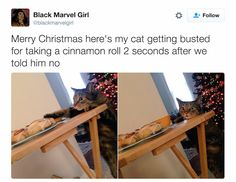 This sounds like something my cat would do.