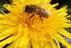 Méh – a csodabogár rovar Insects