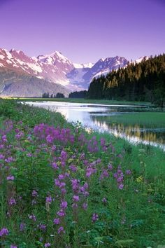 Vertical big canvas of wildflowers next to a lake with snowy mountains in the distance. Fireweed in Bloom Along Pond w/Chugach Mtns SC AK Summer Wall Art By: Jeff Schultz from Great BIG Canvas. Nature Landscape, Landscape Photos, Landscape Paintings, Photos Black And White, Champs, Seen, Go Camping, Camping Hacks, Outdoor Camping