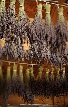 I'd love to hang lavender in a room one day. Especially in baby's nursery.