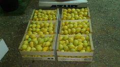 limón verna!  prúebalo en www.ventadelimones.es