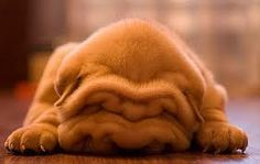 oh, those wrinkles :) don't worry about them. you're sooo sweet!:)