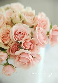 Pink roses as wedding flowers ... Wedding ideas for brides, grooms, parents & planners ... https://itunes.apple.com/us/app/the-gold-wedding-planner/id498112599?ls=1=8 ... The Gold Wedding Planner iPhone App.