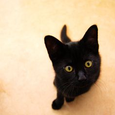 """Reminds me of Dahlia as a baby!    Cute Cat - Black Cat Art - Baby Animal Print - Pet Photography - 8x8"""". £16.00, via Etsy."""