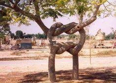 tronco entrelazado