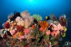 A bustling sessle invertebrate dominated reefscape in Komodo, Indonesia
