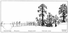 7.10.C Community Assembly Ecological Succession Primary