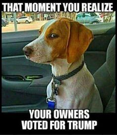 This is every dog in my family but mine... Rosie knows better...