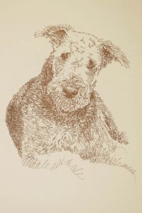 Artist Stephen Kline draws his Airedale Terrier from only the name of the breed. See at: http://drawdogs.com/product/dog-art/airedale-terrier-dog-portrait-by-stephen-kline/