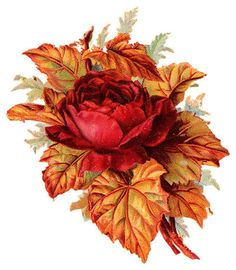 Red rose with autumn leaves