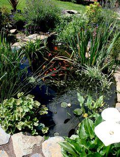 My garden pond #1   Flickr - Photo Sharing!