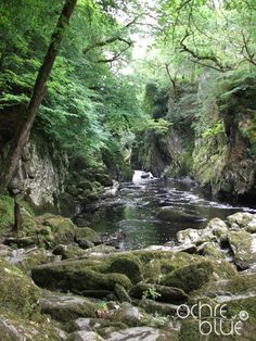 Great British woodlands