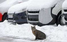 """Animal Tracks 