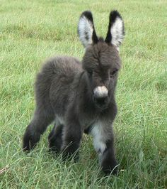 burrico #babyanimal #cuteanimal 135+ Cute Baby Animal | Are You Sure Your Heart Can Handle This Cutest One ?