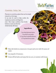 HerbFairies-PlantainTea