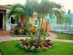 Landscaping Island Bed. Although this is not one of the palm species we will be putting in our yard, I LOVE palm trees included in landscaping. Especially framing a home and putting palm islands in the back yard.