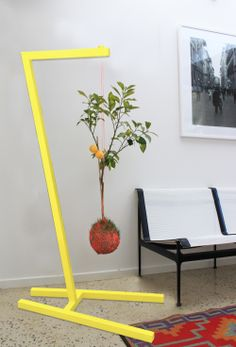 Google Image Result for http://www.theurbanlist.com/sites/default/files/a_list_images/Mister-Moss-lemon-tree.jpg
