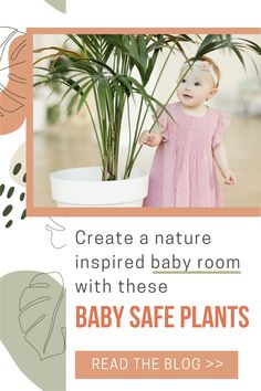 Houseplants will add a soothing aesthetic to your baby's nursery. But when decorating with houseplants it's important to choose indoor plants that are safe for babies. Some types of plants are toxic to babies and children. Read the blog to find out the 7 houseplants we recommend for your nature inspired baby room decor and why. Cool Plants, Air Plants, Indoor Plants, Types Of Houseplants, Types Of Plants, Low Light Plants, Baby Nursery Decor, Baby Safe, Nature Inspired
