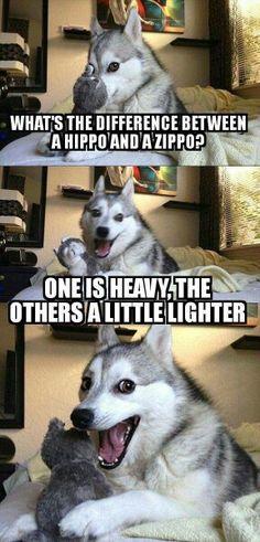Still an amazing dog