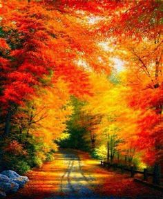 Fall drives and amazing scenic routes for leaf peepers and Fall foliage Fall Pictures, Pretty Pictures, Nature Pictures, Beautiful World, Beautiful Places, Autumn Scenes, All Nature, Autumn Nature, Nature Tree