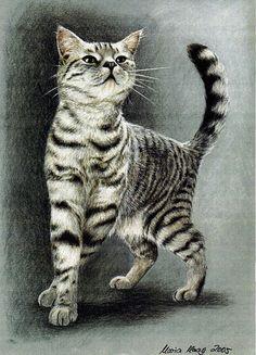 DEINE Katze,verewigt in einer naturrealistischen,ausdrucksstarken Pastell-Farbstiftzeichnung!    Mir ist es ein besonderes Anliegen, mit meiner Zeichn