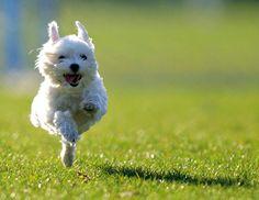Aww Happy Puppy!! ;))