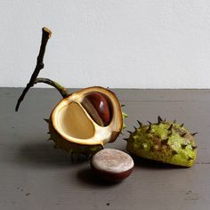 Ceramic Horse Chestnut on twig Half shell, double nut and lid -  Penkridge Ceramics