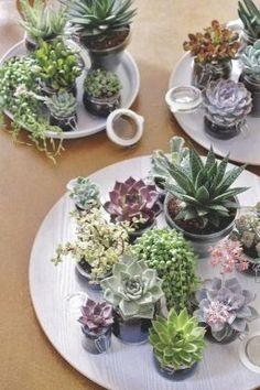 Decorar con plantas suculentas