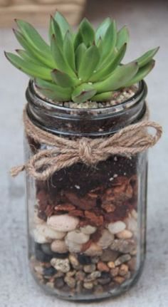love this mason jar potted succulent