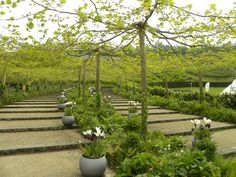 Pleached Platanus @ the Eden Project, UK, seen this at Eden; fantastic!