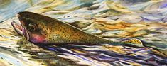 SPENT rainbow trout watercolor print from an original painting by Dean crouser (original has been sold). Signed and numbered by the artist, Bass Fishing Pictures, Fisher, Hummingbird Art, Rainbow Trout, Fish Print, Watercolor Bird, Art Store, Bird Prints, Landscape Paintings
