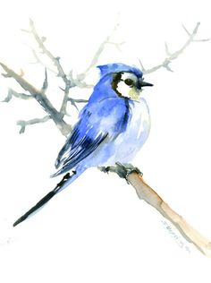 Blue Jay One of  a kind original watercolor painting bird art bird illustration blue jay art blue wall art bird lover gift 12 X 9 by ORIGINALONLY on Etsy
