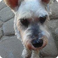 Adopt A Pet :: Pepper - Sharonville, OH