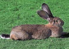 Imagini pentru iepuri