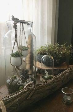 Terrarium, Glass Vase, Home Decor, Terrariums, Interior Design, Home Interior Design, Home Decoration, Decoration Home, Interior Decorating