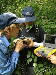 Dr. Sharon Deem, veterinarian & epidemiologist at the #stlzoo, uses a portable #ultrasound to check the heart of a box #turtle as part of the St. Louis Box Turtle Project, a partnership between the Saint Louis Zoo, Washington University in Saint Louis, Tyson Research Center, Forest Park Forever, and the Max Planck Institute, to better understand environmental factors that may be affecting the health of wildlife and humans alike. Photo by Caroline Ling