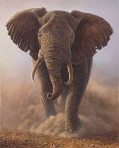 Charging Bull — African Elephant by Larry Zach Elephant Canvas, Elephant Love, African Elephant, Elephant Paintings, Elephant Drawings, Happy Elephant, Elephant Trunk, Elephant Photography, Canvas Art