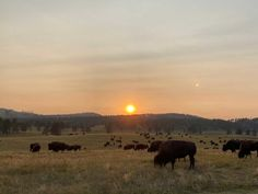 Curious about what our team discovered in South Dakota? Read this science expedition report.