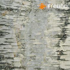 Another design of our new panels by @barkhousehighlandcraftsmen : White Birch (Betula papyrifera) . It can be used for interior and exterior - as covering for walls, ceilings, furniture inserts etc.   . #freundgmbh #barkhouse #natural #barks #bark #panel #wallcovering #customdesign #biophilic #inspiration #interiordesign #monday #wallart #nature #interior #wood #wooden #materialfordesign