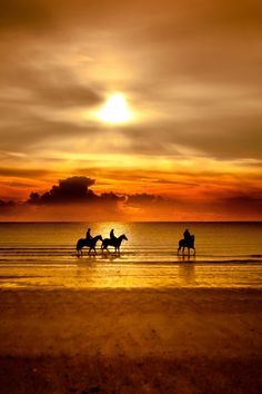 Amazing natural colours: #horses on the beach at sunset https://www.facebook.com/joinsotoluxury