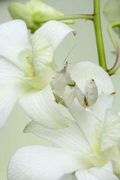 Mimetismo y camuflaje en insectos