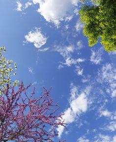 Sky Ceiling Spring Blossoms
