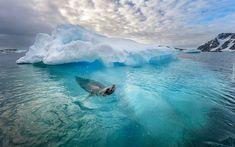Morze, Zima, Foka